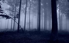 Обои лес, деревья, природа, фото