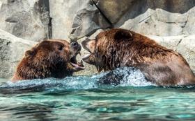Обои вода, природа, медведи