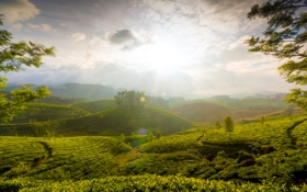 Обои зелень, свет, холмы, индия, The Hills of Munnar