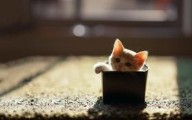 Обои кошка, дом, коробка