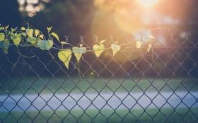Картинка листья, забор, ограда, листики