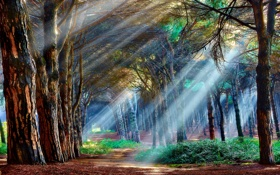 Обои light, forest, trees, mystical