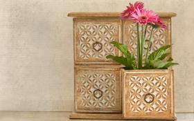 Обои герберы, шкафчик, ящик, розовые, цветы
