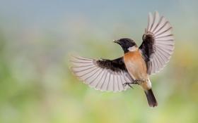 Картинка полет, птица, еда, крылья, зернышко