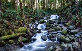 Обои лес, деревья, река, ручей, камни, заросли, поток