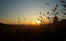 Обои поле, закат, стебли