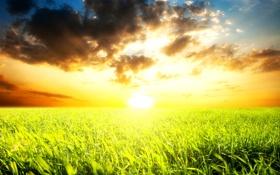 Картинка поле, небо, трава, солнце, облака, горизонт, яркое