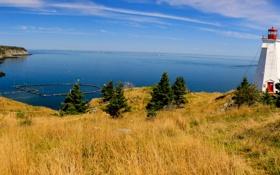 Обои море, небо, трава, деревья, дом, маяк, панорама