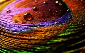 Обои цвета, капли, макро, фото, перо, яркие