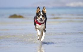 Картинка морда, вода, радость, брызги, берег, игра, собака