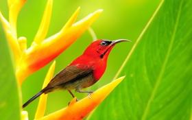 Картинка птица, растение, клюв