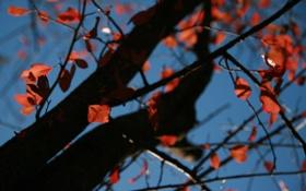 Обои осень, небо, листья, природа, фон, дерево, ветви