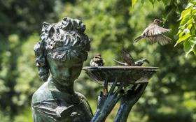Картинка птицы, фонтан, воробьи