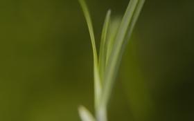Картинка трава, макро, зеленая