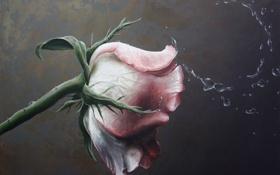 Обои роза, натюрморт, still life, paintings, картина., Traditional art