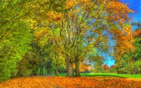 Обои осень, трава, небо, дом, дорожка, листья, крыша