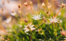Картинка трава, цветы, блики, размытость, белые
