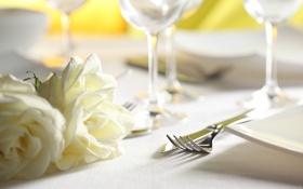Обои цветы, роза, приборы, нож, вилка, сервировка