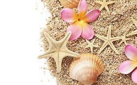 Обои цветы, камешки, морские звезды