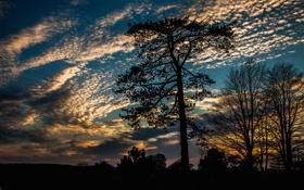 Обои небо, облака, деревья, закат, силуэт