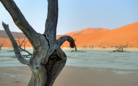 Обои природа, пустыня, деревья, коряги