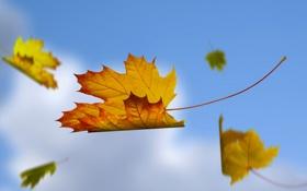 Обои листья, коллаж, небо, осень, природа