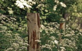 Картинка макро, забор, травы