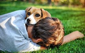 Картинка друг, собака, мальчик, парень, пёс, photo Bogdan Lucaci