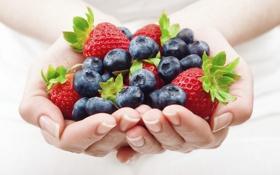 Картинка ягоды, руки, клубника, ладони, голубика