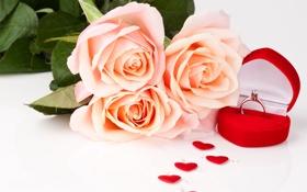 Обои цветы, розы, кольцо, сердечки, flowers, roses