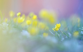 Картинка весна, трава, желтые, луг, поле, цвет, размытость