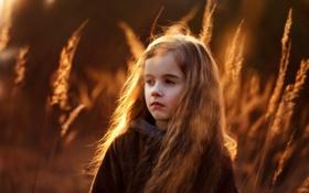 Картинка трава, закат, природа, дети, девочка, ребёнок