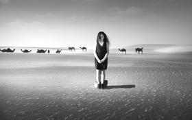Обои девушка, одиночество, пустыня, арт, верблюды, Black and White, Silent Desert