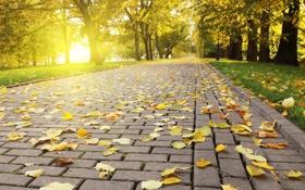 Обои осень, плитка, листва, Autumn leafs, опадающая, свет, яркий
