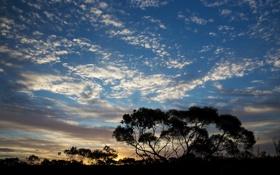 Обои небо, облака, закат, деревья, силуэт