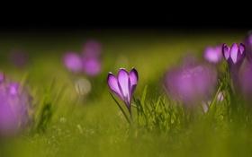 Обои зелень, трава, цветы, природа, фон, обои, поляна