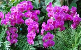 Обои листья, орхидеи, экзотика