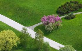 Обои кустарник, дорожки, парк, деревья, трава