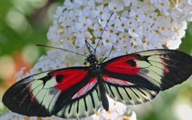 Картинка цветок, узор, бабочка, растение, крылья, насекомое, мотылек