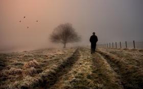 Картинка дорога, поле, осень, небо, цвета, птицы, природа
