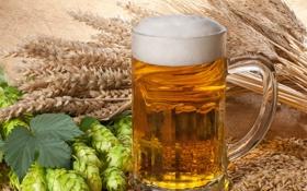 Обои пена, пиво, кружка, светлое, хмель