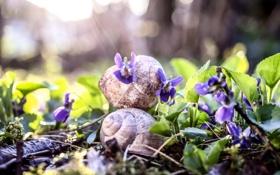 Обои цветы, природа, улитки