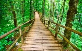 Картинка деревья, мост, парк, красота, весна, высокие, Spring park