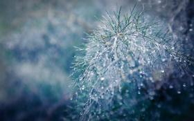Обои капли, роса, ветка, cold spring