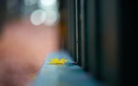 Картинка осень, забор, лист