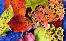 Обои осень, листья, цвета