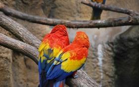 Обои ветки, попугай, краски, камень