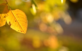 Картинка зелень, осень, листья, макро, желтые, размытость, листики