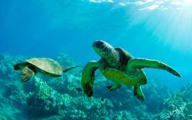 Картинка море, вода, лучи, свет, океан, черепаха