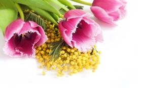 Обои тюльпаны, розовые, желтая, крупным планом, мимоза